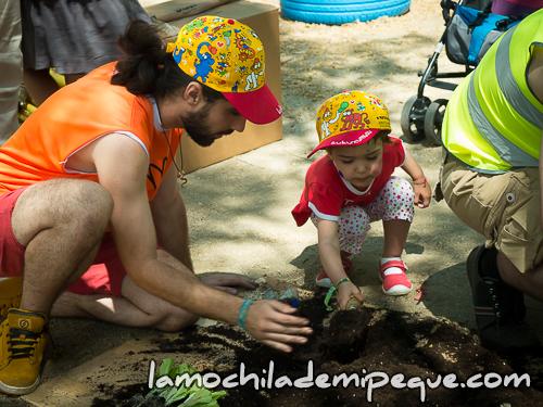Actividad plantar lechugas